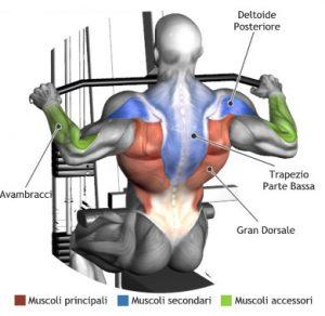 Lat Machine Avanti muscoli