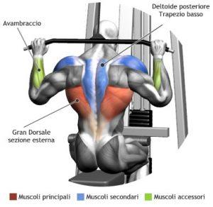 Lat Machine Dietro Muscoli