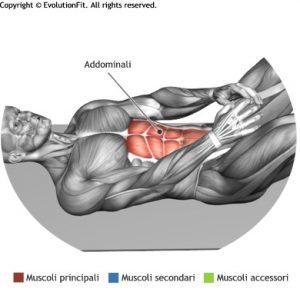 addominali muscoli coinvolti